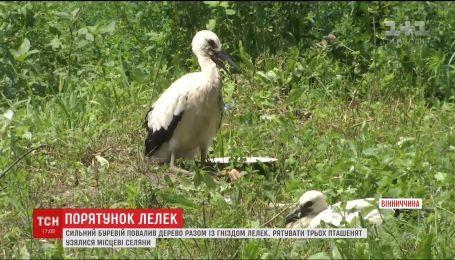 В Винницкой области всем селом спасали аистов