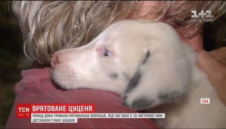 В США 30 часов из ловушки освобождали глухое щенка