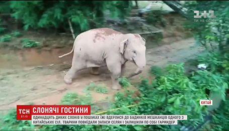 Десяток диких слонов ворвались в дом жителей китайской деревни