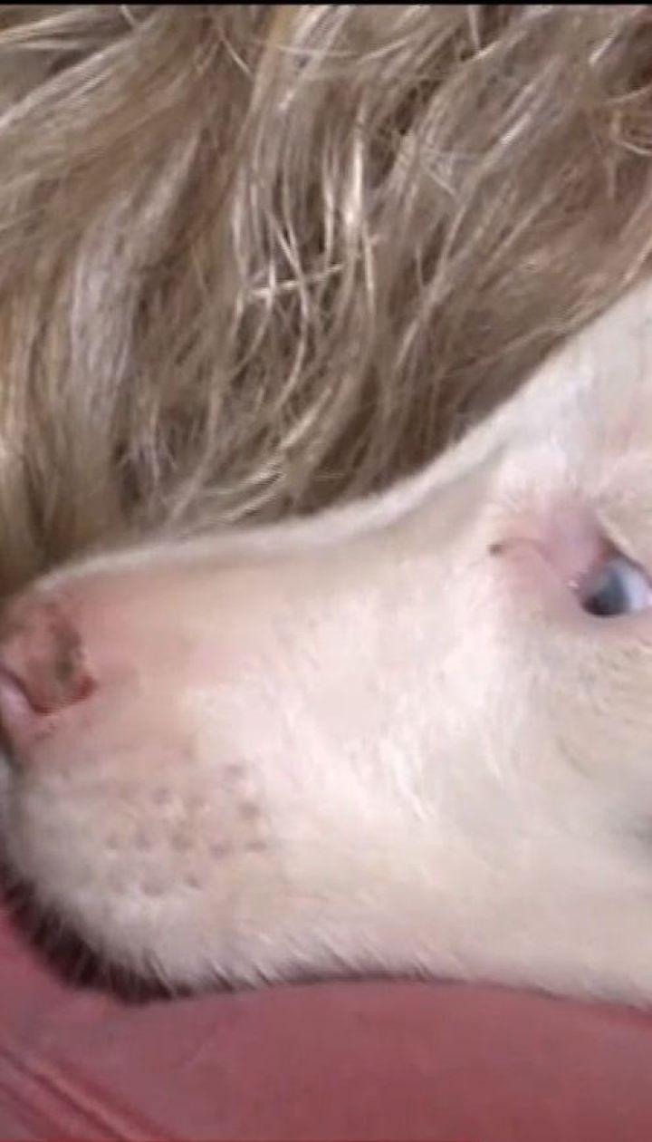 У США 30 годин з пастки визволяли глухе цуценя
