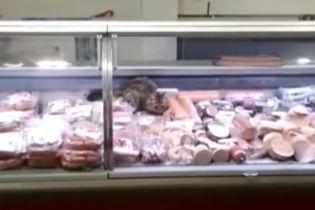 У Києві шукають кота, який нахабно пообідав на прилавку ковбасного відділу в супермаркеті