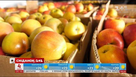 Скільки зараз коштують яблука та коли чекати на яблучний бум