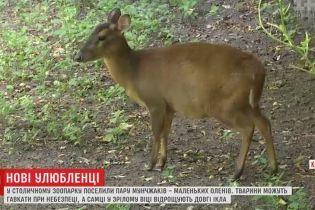 В зоопарк Киева завезли маленьких оленей, которые лают и отращивают клыки