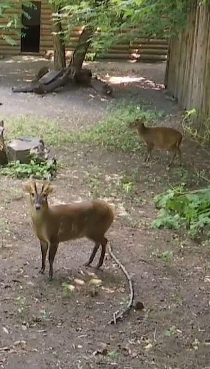 Лает, но не собака. Древнейшие олени поселились в зоопарке Киева