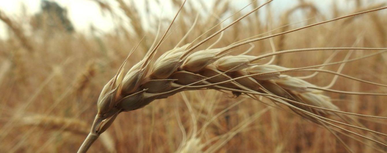 На Полтавщине сгорело огромное поле пшеницы