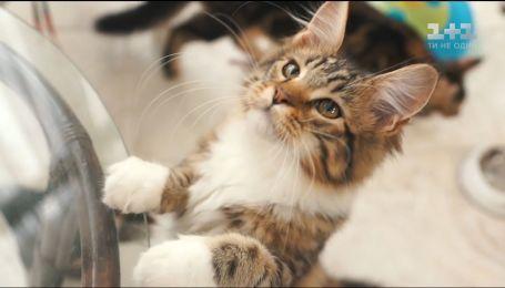 Каким должно быть питание счастливых котов