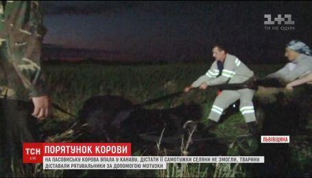 На Львівщині рятувальники дістали корову з глибокої канави