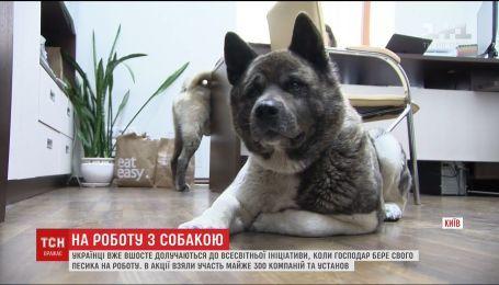 """""""Возьми собаку на работу"""". Украинские компании присоединились к всемирной инициативе"""