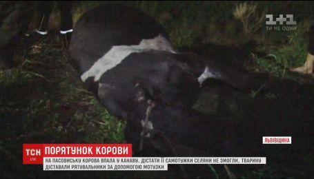 Корову, которая во время выпаса упала в глубокую канаву, вытаскивали спасатели на Львовщине