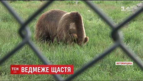 Поблизу Житомира відкрили притулок для ведмедів, яких врятували від знущань