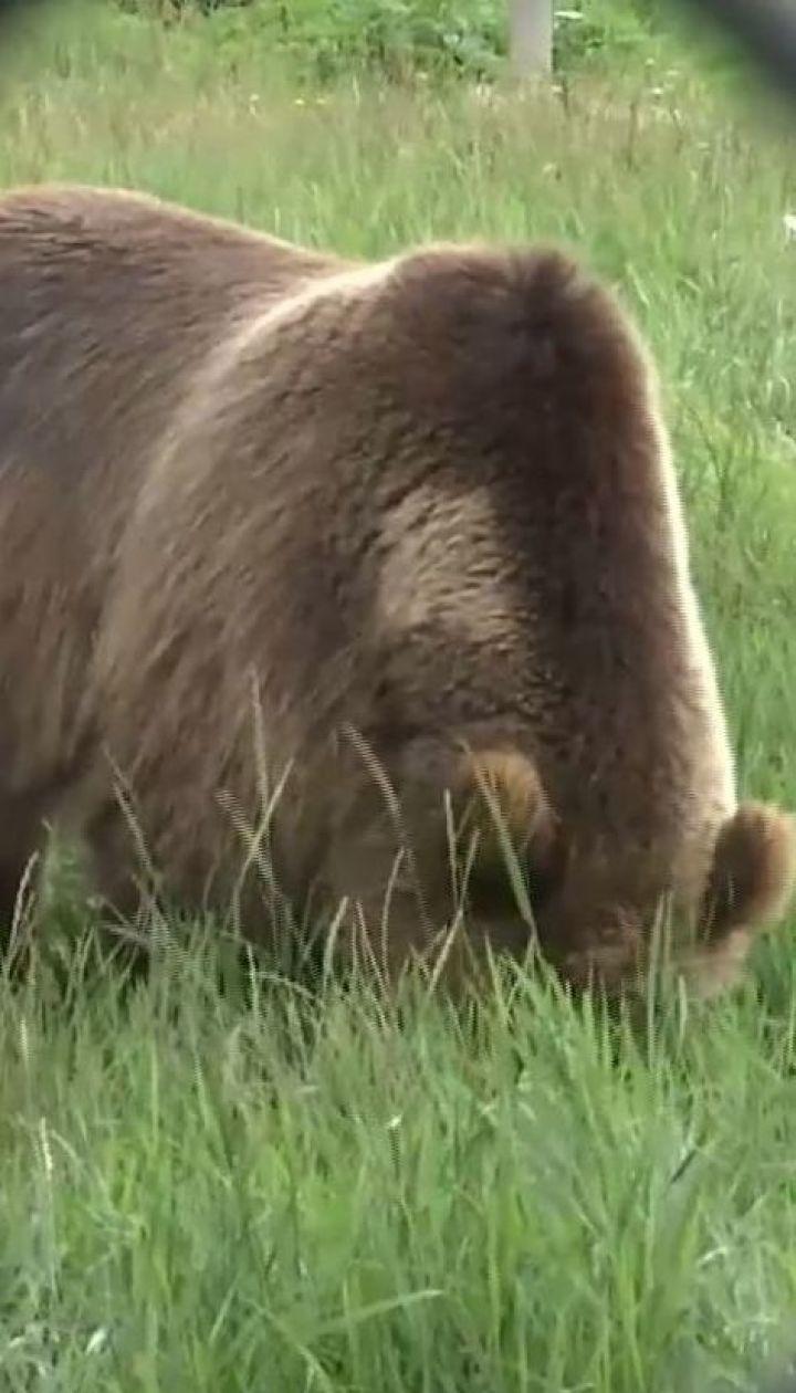 Вблизи Житомира открыли приют для медведей, которых спасли от издевательств