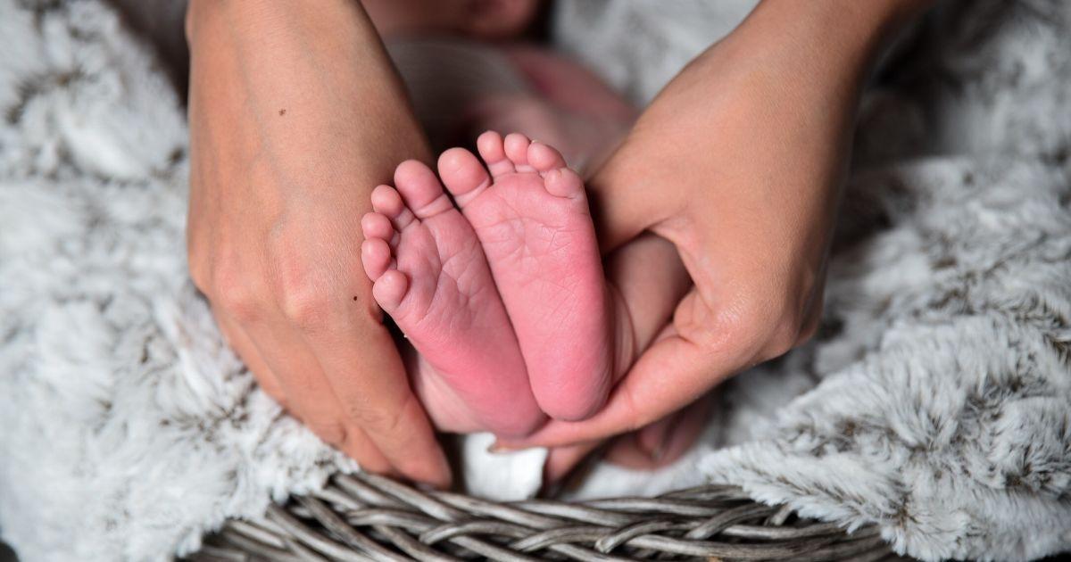 Німеччина і Литва похизувалися новонародженими малюками-гігантами