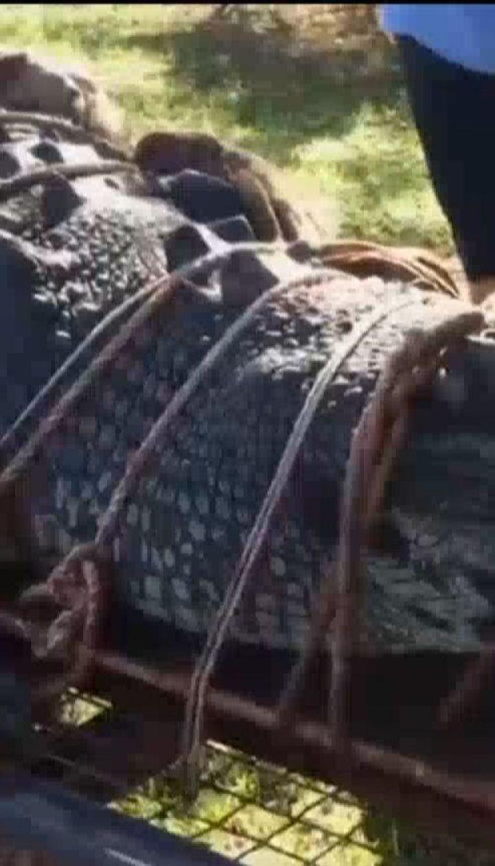 Австралийские рейнджеры поймали 5-метрового морского крокодила