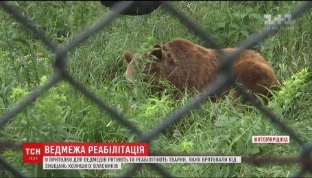 У притулку під Житомиром ведмедів повертають до нормального життя
