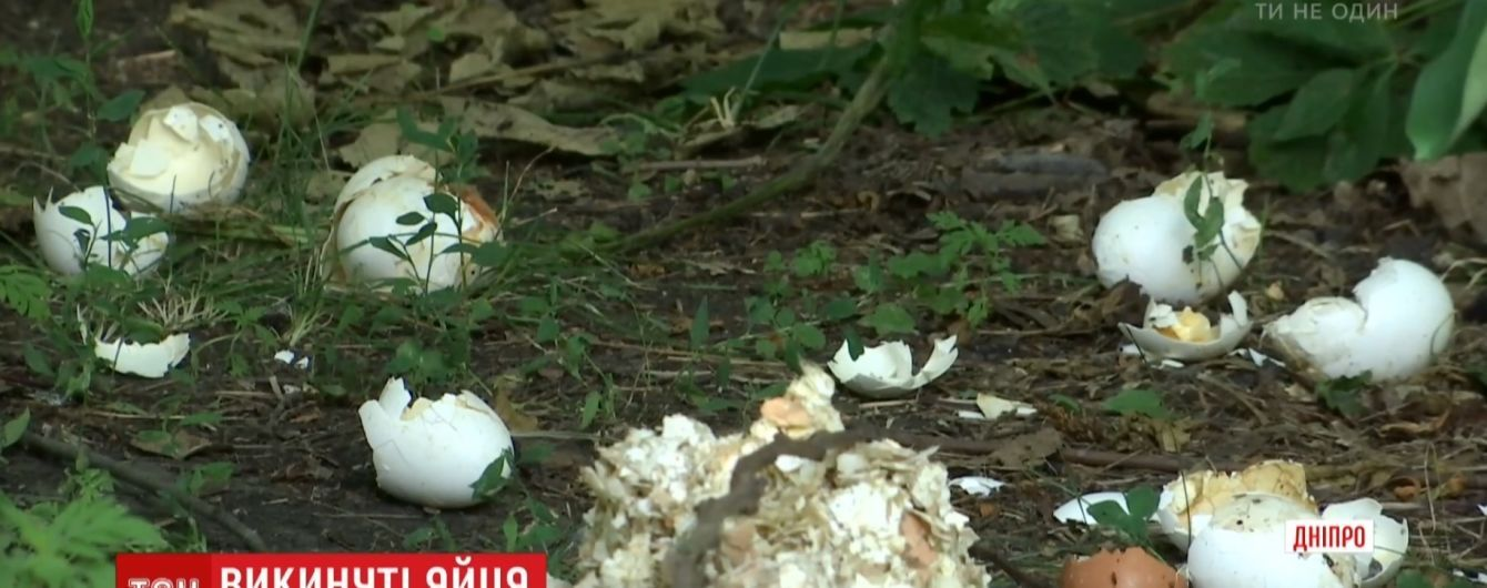 Жители Днепра задыхаются от вони выброшенных на окраине тысяч тухлых яиц