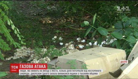 Жителі Дніпра потерпають від смороду через сотні тухлих яєць у посадці