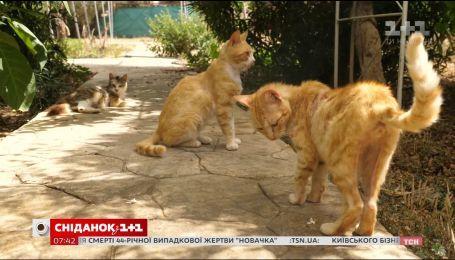 Мой путеводитель. Кипр - монастырские кошки и самое старое вино в мире