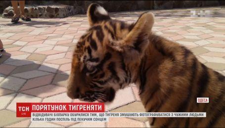 Руководство одесского биопарка, где издевались над тигренком, может отделаться штрафом