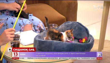 Як обрати іграшки для котів - ветеринар Вікторія Шерстюк