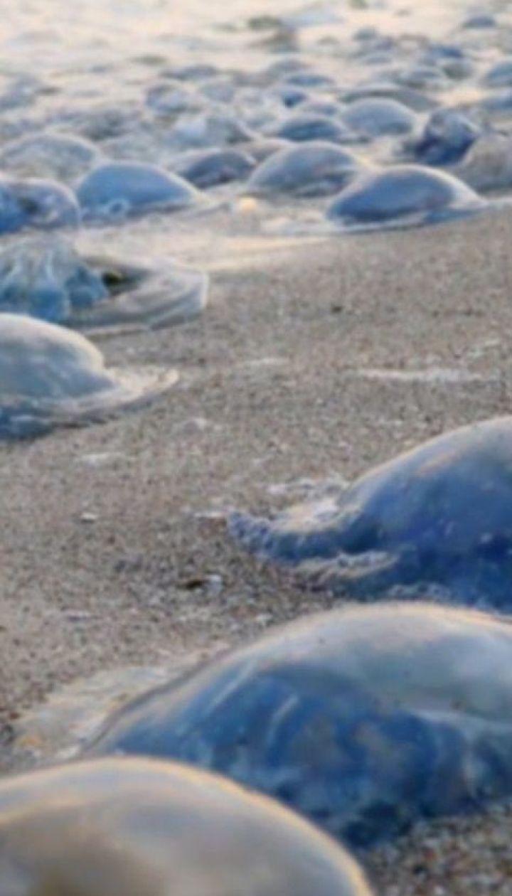 Отруйна медуза Корнерот з'явилася в Азовському морі