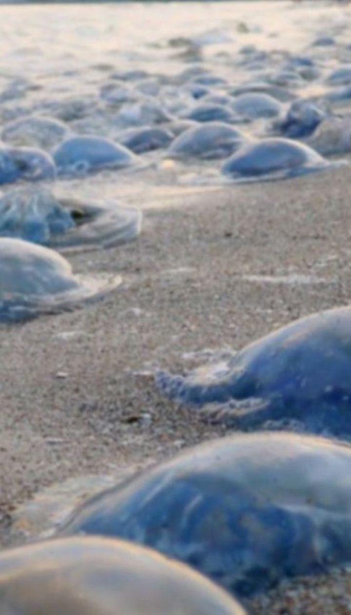 Ядовитая медуза Корнерот появилась в Азовском море