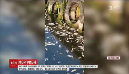 На Харьковщине заметили массовый мор рыбы