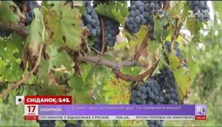 Сезон винограду та 20 гривень нового зразка - економічні новини