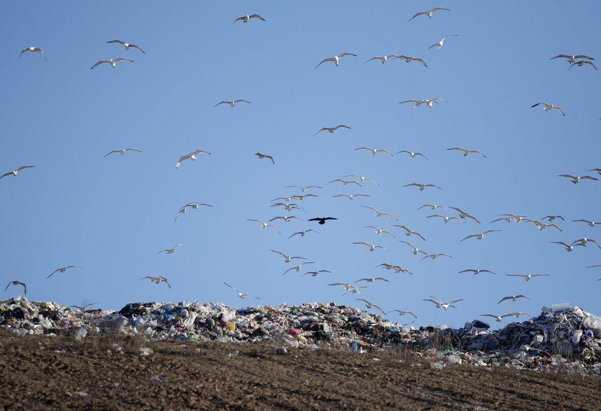 Підгірці, полігон, сміття, сміттєзвалище_3