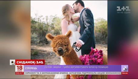 Почему новобрачные берут с собой на свадьбу альпак