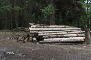 Незаконное уничтожение лесов: правительство всерьез возьмется за борьбу с контрабандой древесины