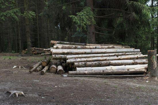 Зеленский подписал закон о запрете вырубки Карпат
