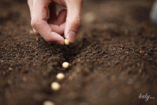 Как самостоятельно заготовить семена растений