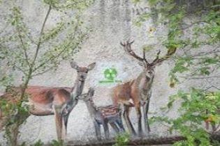 В Припяти в Чернобыльской зоне неизвестные обрисовали дома логотипами туроператора