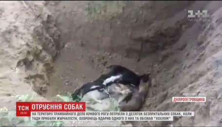 Десятки собак потруїли на території трамвайного депо у Кривому Розі