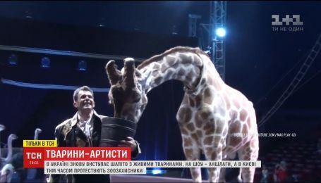 Цирк без тварин. Зоозахисники вчергове вимагають припинити експлуатувати звірів