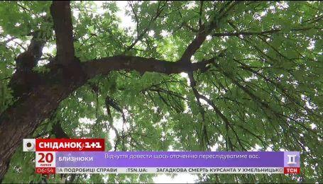 Люди, які лікують дерева - як працюють арбористи