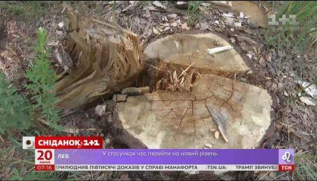 Почему киевская власть наложила мораторий на вырубки местных лесов