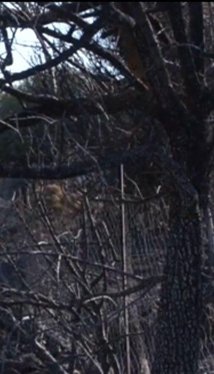 Пепелище вместо оливковых садов. На Крите пожары уничтожили 500 га плантаций