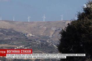 На відновлення сільського господарства Криту після пожежі знадобиться 15 років