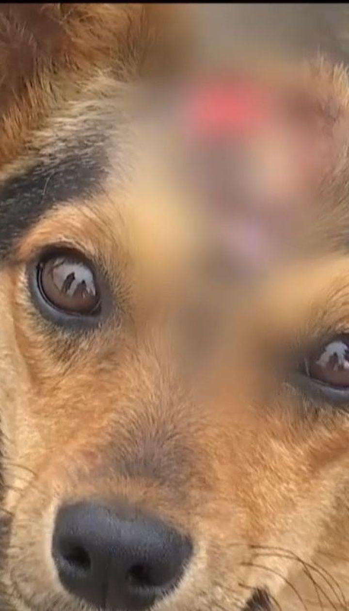 У Ковелі невідомий катує собак, залишаючи на голові різані рани
