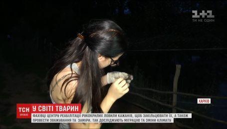 В Харькове специалисты ловили летучих мышей, чтобы исследовать миграцию и изменения климата