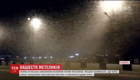 В Витебске заметили нашествия ночных бабочек