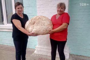 На Київщині знайшли гриб-гігант вагою майже 18 кг