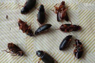 Нашестя жуків на Хмельниччині: стали відомі причини масштабного поширення комах