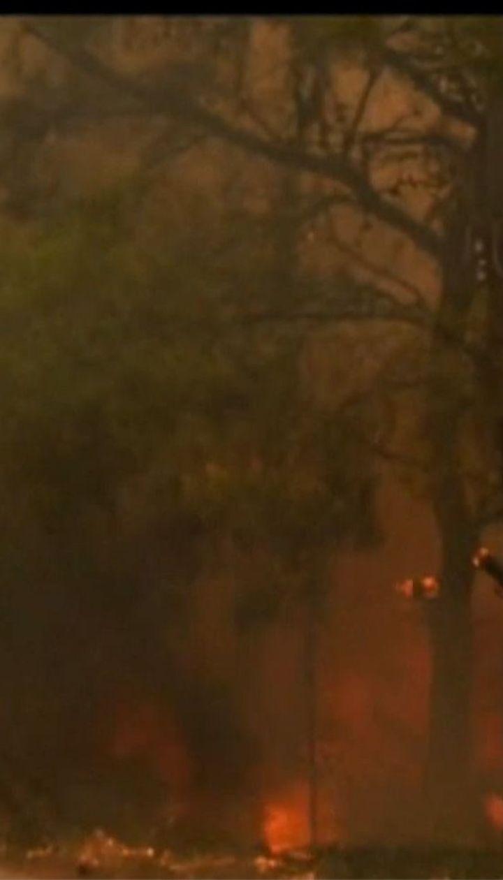 Восточная Греция страдает от масштабных лесных пожаров, есть погибшие