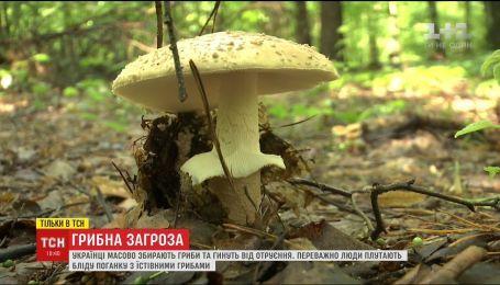 Вбивчий сезон: як правильно збирати та готувати гриби