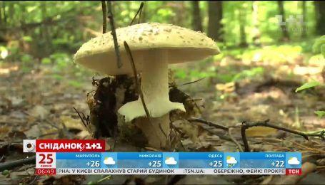 Як уникнути небезпеки, збираючи гриби, та що робити в разі отруєння