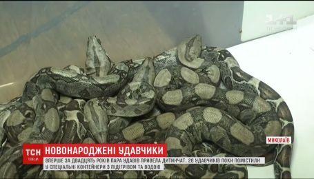 26 удавчиков родились в Николаевском зоопарке