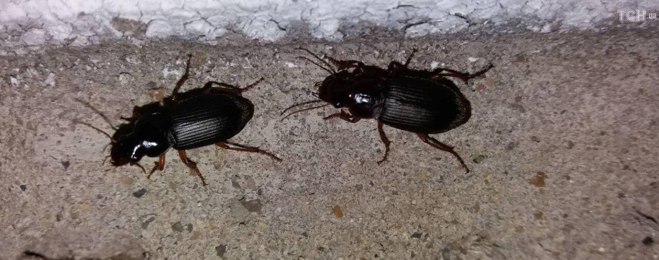 Пекельне нашестя жуків на Хмельниччині: комахи залазять людям у вуха і не дають спати