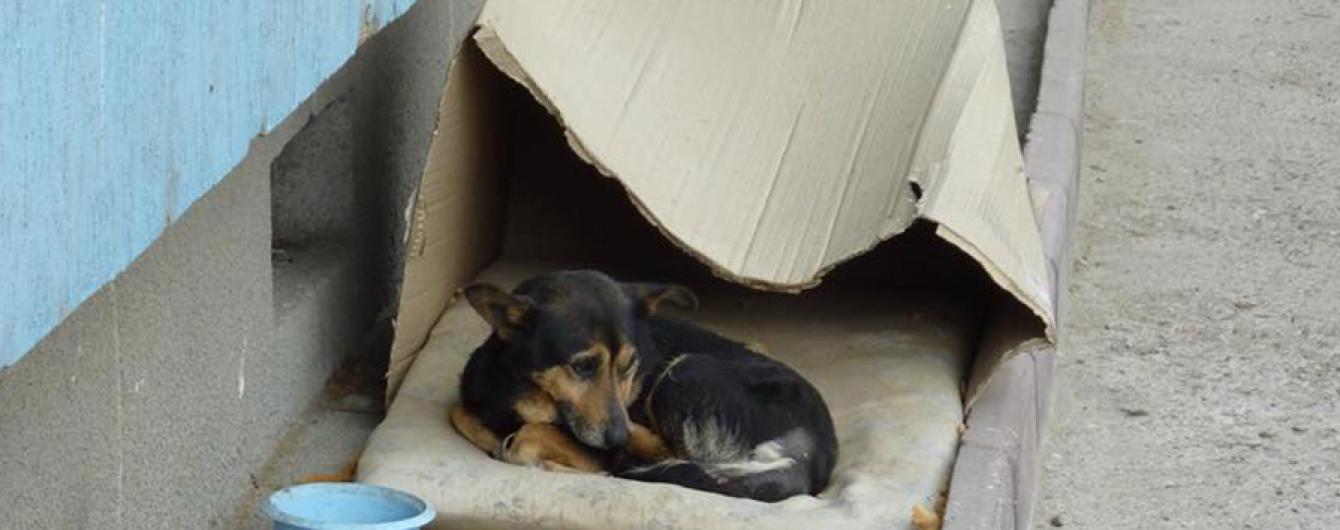 """""""Окупували наше місто"""": жителі Миколаєва нарікають на безпритульних собак, які кидаються на перехожих"""